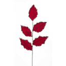 Red Leaf With White Trim Pick